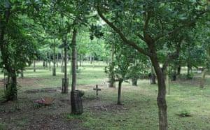 A woodland burial site
