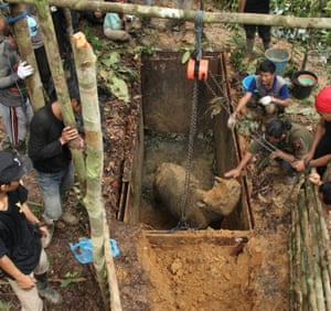 Sumatran rhino sighted in Indonesian Borneo for first time in 40 years