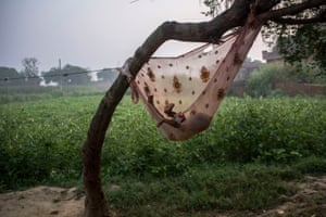 Baby sleeps in a hammock in the village of Peepli Kheera, in front of one of the fields used for defecation