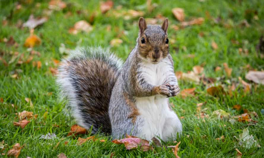 A different and presumably friendlier squirrel.