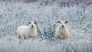 Two sheep in a frost-covered field near Baltinglass after a chilly night caused temperatures to drop below freezing