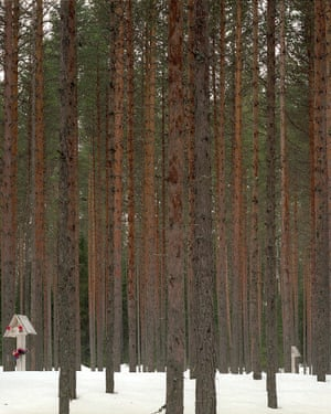 The woods at Sandormokh, now a memorial to the victims of the gulag.