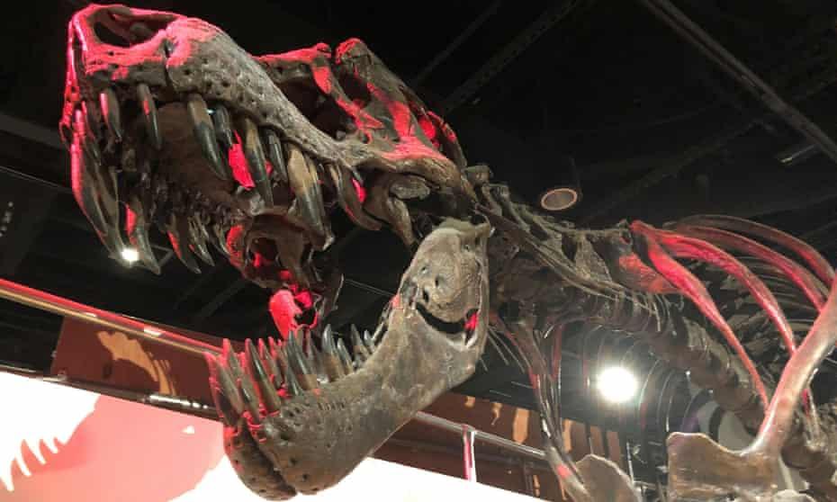 The skeleton of a Tyrannosaurus rex.