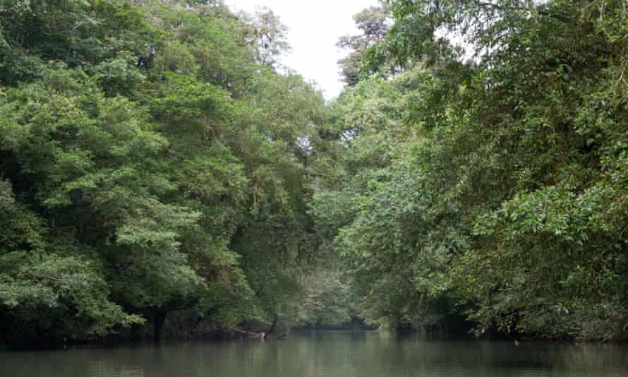 A tributary to the river San Juan in the rain forest biosphere reservation of Indio Maiz, Nicaragua.