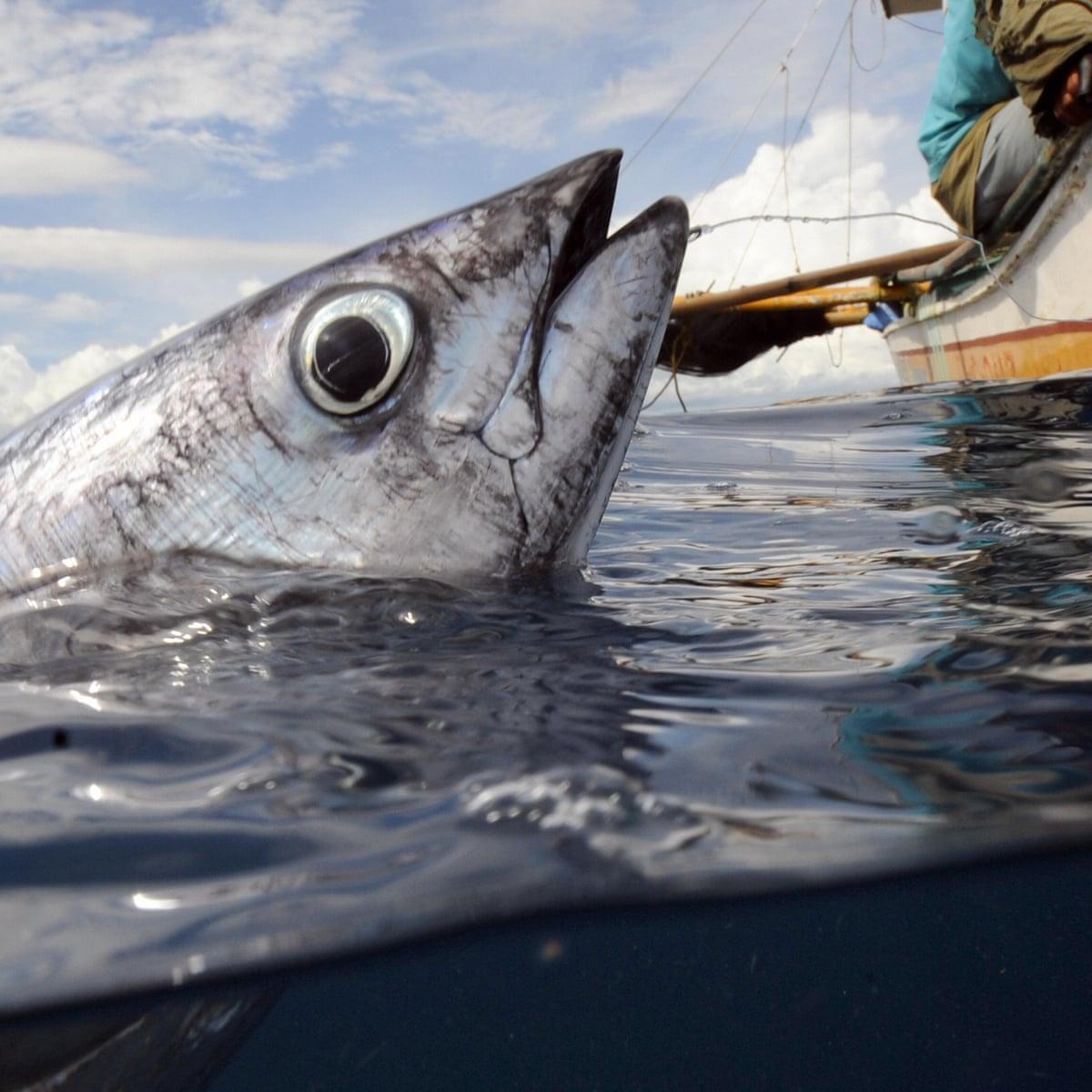 Are We Wrong To Assume Fish Can T Feel Pain Fish The Guardian