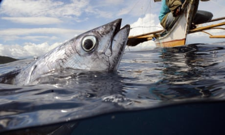 Are we wrong to assume fish can't feel pain?