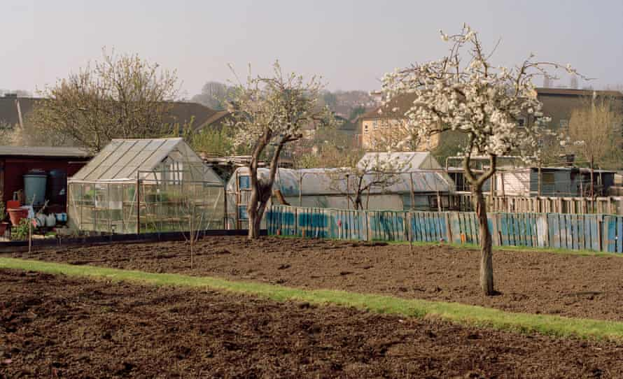 The Colindale allotments in London, where Lea Adri-Soejoko was murdered.