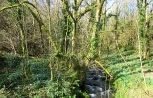 A stream runs through undergrowth