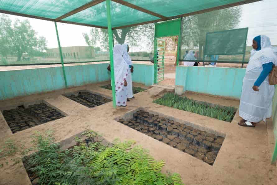 Women in a tree nursery, part of a climate change adaptation project in Nile River state