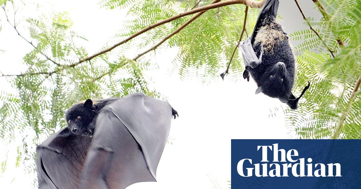 'Zoonotic': the Covid-19 origins theory that is not that batty