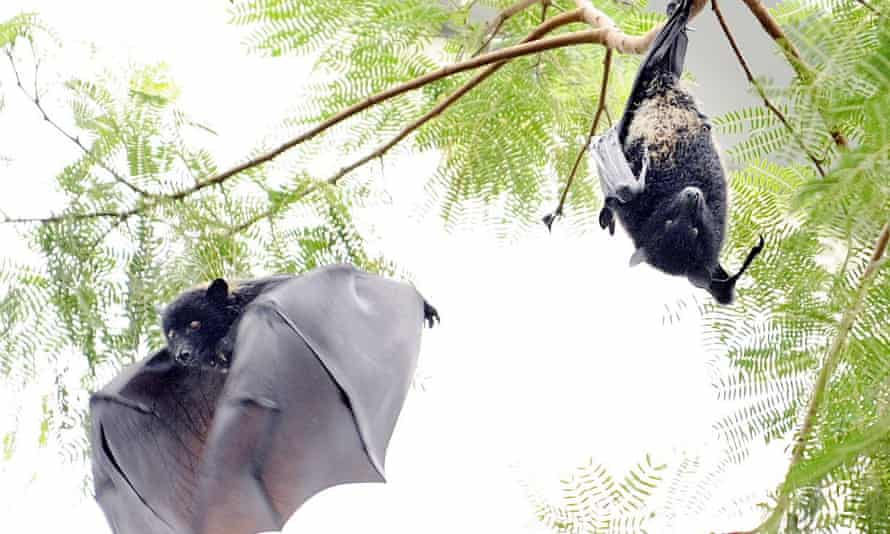 There is strong evidence that Covid-19 originated in bats.