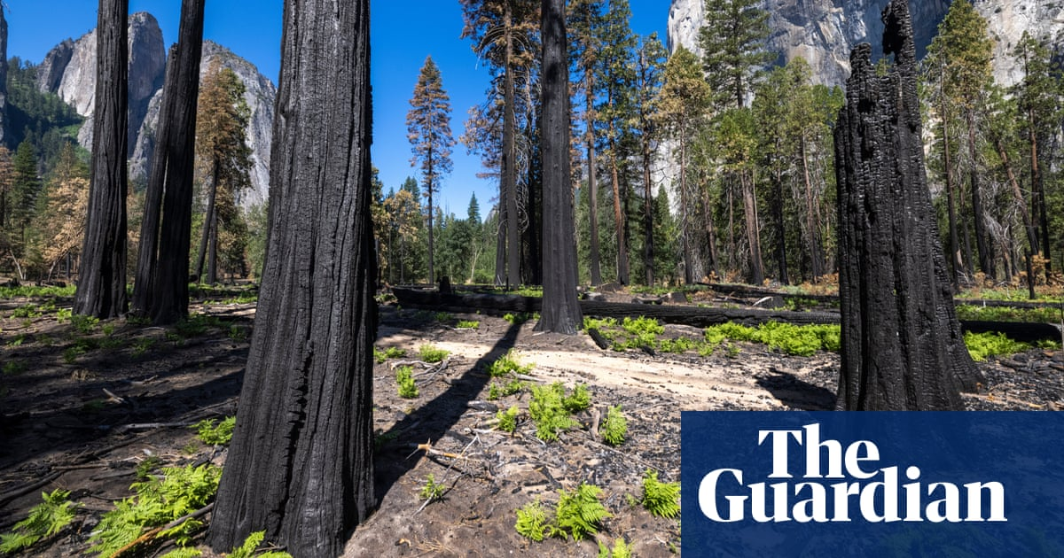 Wildfires, deforestation and global heating turn 10 Unesco forests into carbon sources