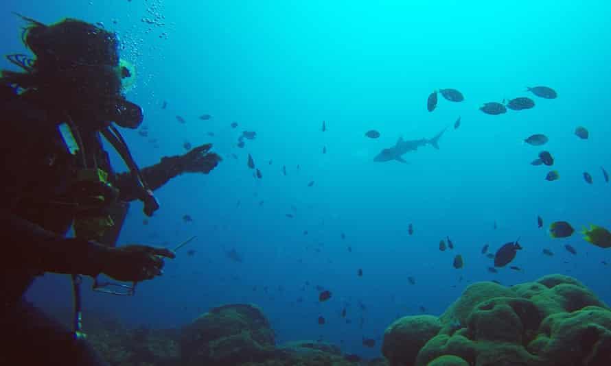 Encountering a reef shark on Inglis Shoal.