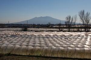 A tobacco greenhouse near Caserta