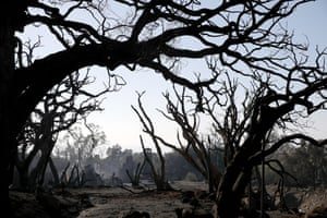 Trees that were burned by a wildfire stand in an area full of debris and mud following a mudslide in Montecito, California on 11 January