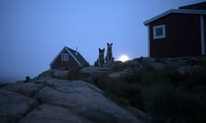 Dogs sit outside a home in early in the morning in Kulusuk, Greenland