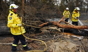 Firefighters douse a tree
