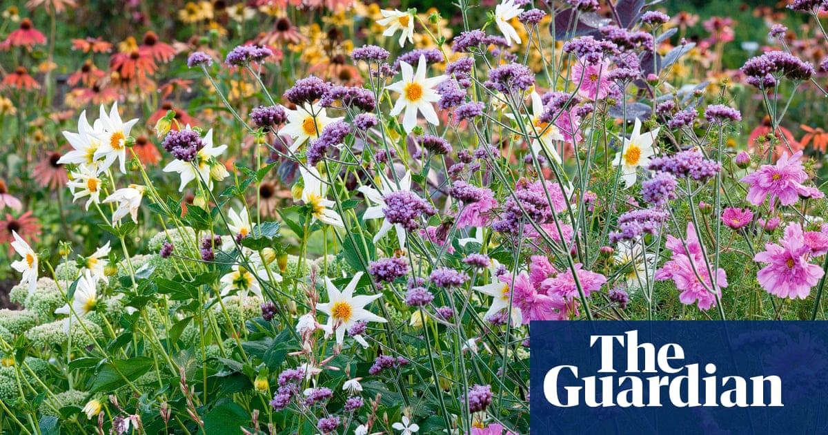 Gardens Want A Burst Of Colour In Autumn Try These Plants Life
