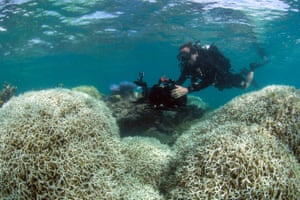 Researchers from the XL Catlin Seaview Survey filming a reef affected by bleaching off Lizard Island in the Great Barrier Reef in March 2016.