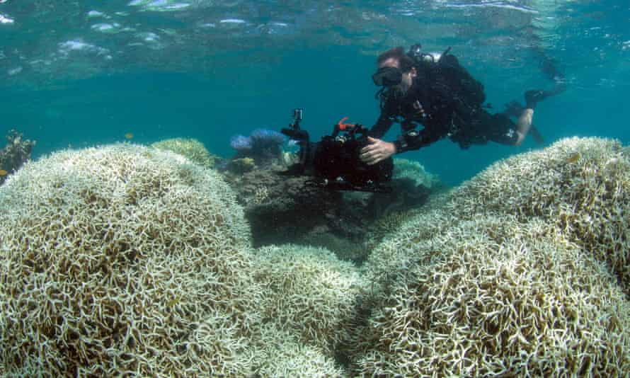 A diver filming a reef affected by bleaching off Lizard Island in the Great Barrier Reef
