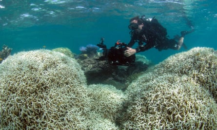 A photo from the XL Catlin Seaview Survey on March 21, 2016 shows a diver filming a reef affected by bleaching off Lizard Island in the Great Barrier Reef. Rising temperature have caused an epidemic of bleaching across the Great Barrier Reef.
