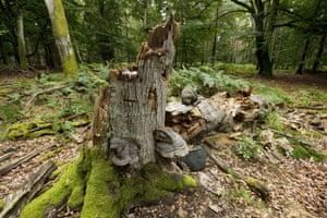 Dead and fallen beech in Mecklenburg-Vorpommern, Germany