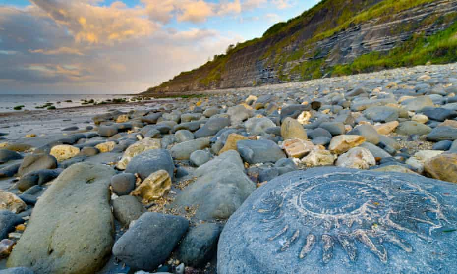 How can we use fossils like this ammonite to recreate the past biology and entire ecosystems of the distant past?