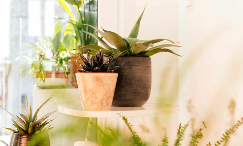 Instagram influencers talk of an 'explosion' in the growth of indoor plant sales.