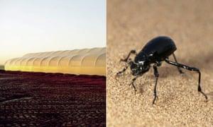 A greenhouse in Abu Dhabi and the Namib Desert beetle.