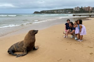 Sydney, AustraliaPeople take pictures of a New Zealand Fur Seal on Manly Beach. Wildlife officers ands surf lifesavers later set up an exclusion zone around the seal to keep onlookers at bay.