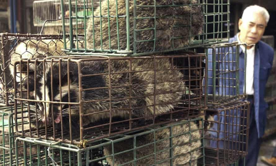 Caged civet cats in a wildlife market in Guangzhou, China.