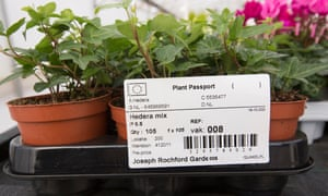 EU plant passport showing the origin of a hedera plant from the Netherlands