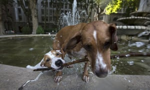 Dogs playing together as they cool off in a fountain in central Madrid, Spain.