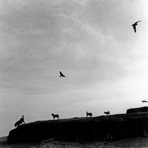 Perros Perdidos, India, 1998