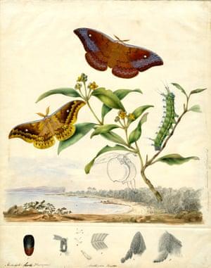 Emperor moths by Harriet Scott
