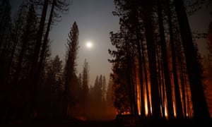 A stand of trees is bathed in smoke and fire in Grizzly Flats late on Tuesday.