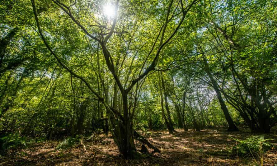 Broadwells Wood (pictured) in Warwickshire