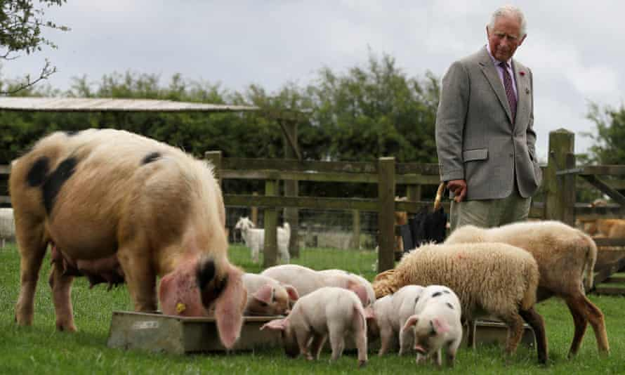 Prince Charles at Cotswold Farm Park, Cheltenham.