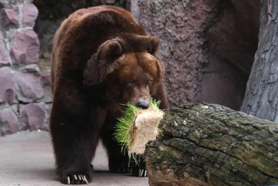 Weather brings Moscow Zoo bears out of hibernation month earlier than usual.