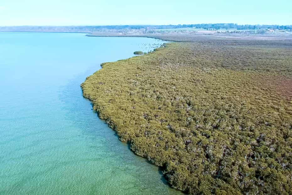 Ramsar listed wetlands bordering Crib Point and Hastings. Victoria, Australia.
