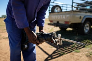 A worker changes the blade on the electric saw used to trim horns.