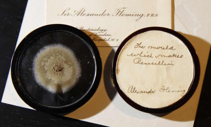 Penicillin mould sold by Bonham's.