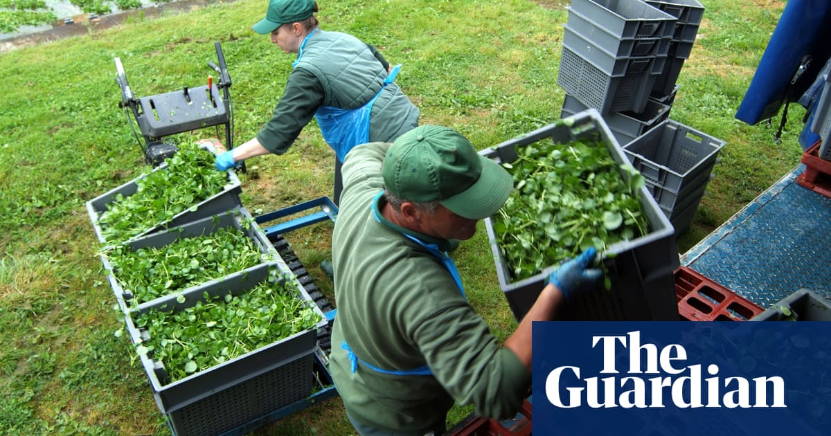 Watercress and Welsh lamb breed added to UK protected foods list