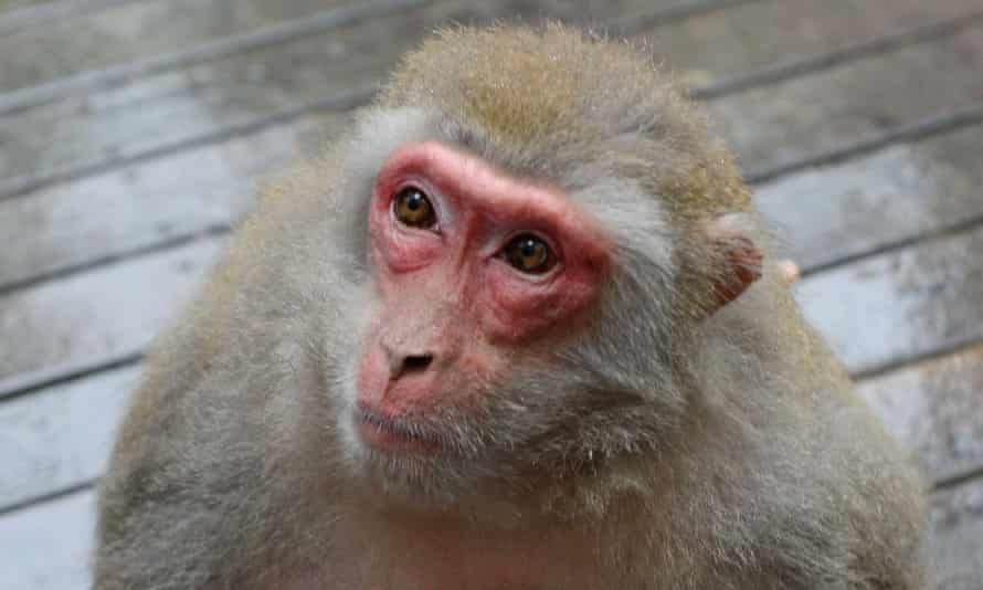 Macaques bred in south Florida are the subject of federal and district scrutiny.