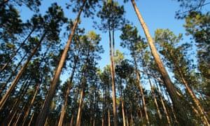 Brunwick Forest in North Carolina