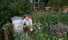 Chelsea flower show: a garden with a green message for the green-fingered