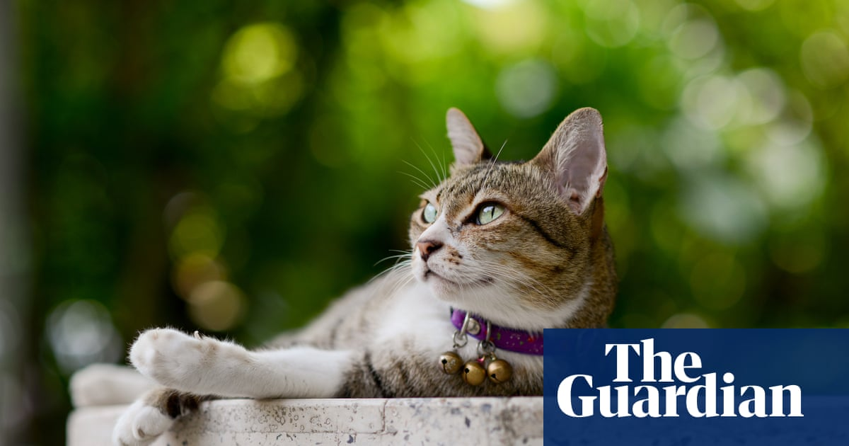 Meaty meals and play stop cats killing wildlife, study finds