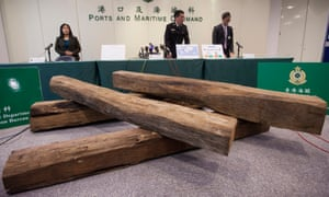 Hong Kong Customs officers with a seized shipment of endangered rosewood logs. More than 7,000 species of wild animals and plants are threatened by illegal trade.