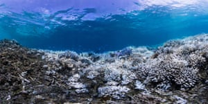 A mixture of bleached and dead corals around Okinawa, Japan in September 2016.