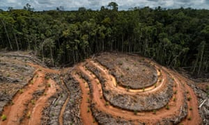 Deforestation at the PT Megakarya Jaya Raya palm oil concession in the Indonesian province of Papua